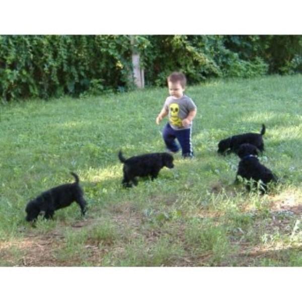 Dog Mother Rescue Missouri