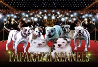 Paparazzi Kennels