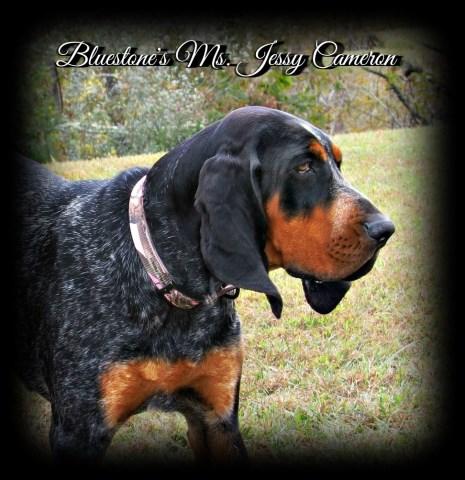 Bluestone Bluetick S Bluetick Coonhound Breeder In Princeton West Virginia