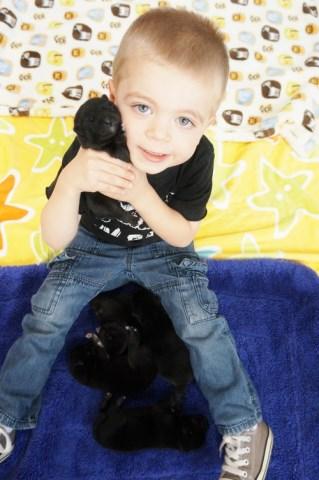 Shiba Inu Puppy Dog For Sale In Phillipsburg New Jersey