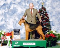 Airedale Terrier puppies for sale Airedale Terrier for sale/adoption