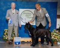 BruceGerardsCaneCorsos Cane Corso for sale/adoption