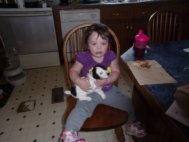 Jack Russell Terrier puppy for sale + 52626