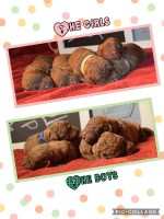 Chesapeake Bay Retriever Dogs and Puppies for Adoption
