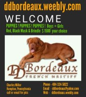 Dogue De Bordeaux Dogs and Puppies for Adoption